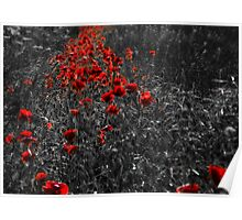 Poppies Pathway  Poster