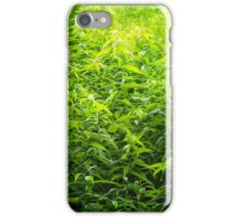 Light in the Jungle iPhone Case/Skin