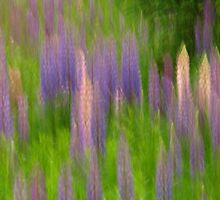 Loopy Lupins by OldBirch