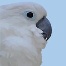 Side Portrait Of A Blue-Eyed Cockatoo Isolated by taiche