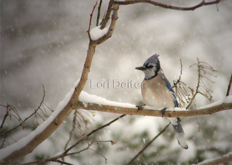 A WINTER'S DAY by Lori Deiter