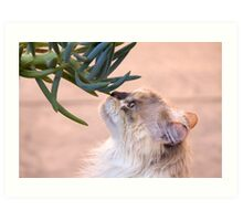 Stop and smell.. the succulent? Art Print