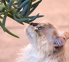 Stop and smell.. the succulent? by Kimberly Palmer