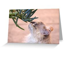 Stop and smell.. the succulent? Greeting Card