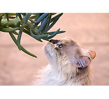 Stop and smell.. the succulent? Photographic Print