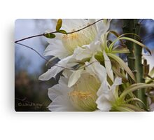 Double beauty Ceres Bloom Canvas Print