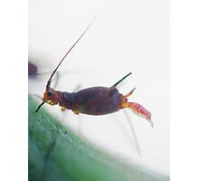 aphid birth Photographic Print