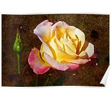 If you like Roses, this one for you! Poster
