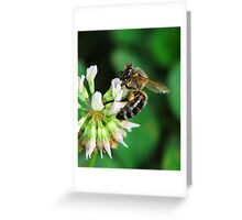 Spreading the pollen Greeting Card