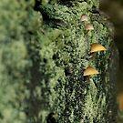 Mushrooms by Patrick Morand