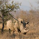 White Rhinoceros by Erik Schlogl