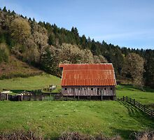 Barn, Humboldt County CA by Theresa Votolato