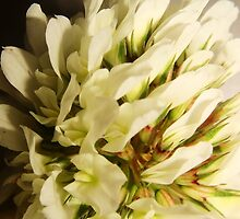 White Bouquet 5 by Mirafaye