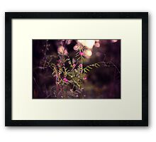 Someplace Special Framed Print