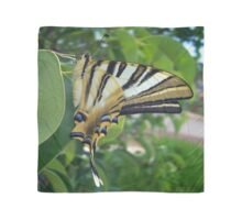 Swallowtail With Partially Closed Wings Side View Scarf
