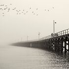 Urangan Pier by Adam Marlow