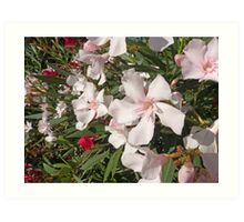 White And Red Oleander Art Print