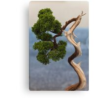 bonsai in the garden Canvas Print