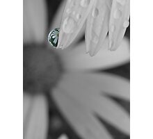 Daisy select colouring Photographic Print