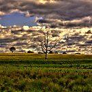Cranky Tree I by Luke and Katie Thurlby