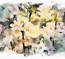 Apple Blossoms by Angela  Marks