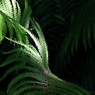 Fern by Wayne Gerard Trotman
