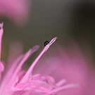 Pink Paradise by Rosy Kueng