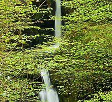 double cascade by Lorraine Parramore
