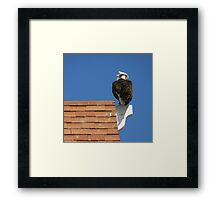 The Fish ??? What Fish ??? Framed Print