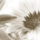 Gerbera by Christine  Wilson Photography
