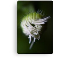 logical chaos (from wild flowers collection) Canvas Print