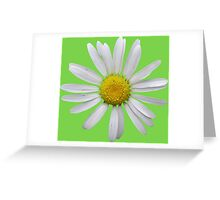 Wonderful white daisy Greeting Card