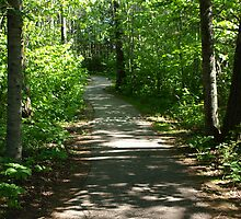 nice path by Cheryl Dunning