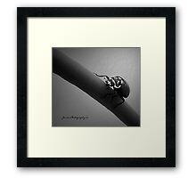 In The Spot Light 2   ( Ladybug Series ) Framed Print