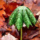 Forest Umbrella by Hope Ledebur