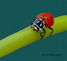 Red Hot Lady  ( Ladybug Series ) by Carla Jensen