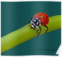 Red Hot Lady  ( Ladybug Series ) Poster