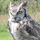 Great Horned Owl by Tina Martin