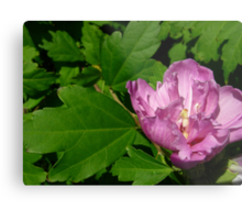 Tree peony, I think Metal Print