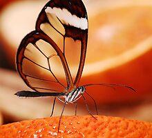 Butterfly by Rachel Slater