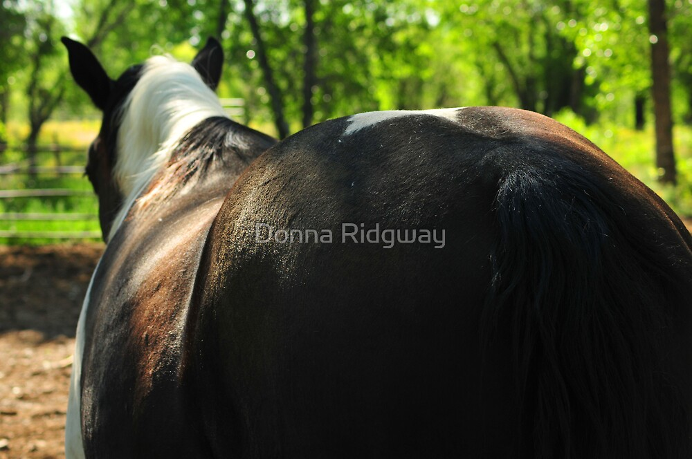 Yes, I'm half Percheron, but I don't want to talk about it! by Donna Ridgway