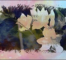 Lillies by Angela  Marks