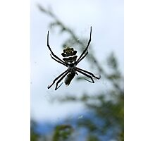 Orb Weaver Spider and Prey Photographic Print