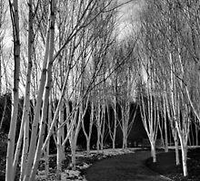 Trees by Rachel Slater