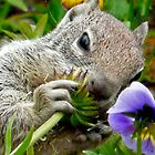 squirrel with a flower by tego53