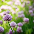 Chives by photographyjen