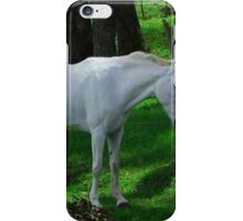 White Horse Beside a Fence iPhone Case/Skin