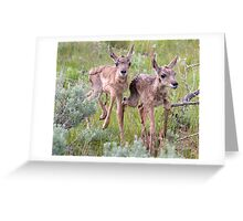 Pronghorn Twins Romping Greeting Card