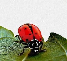 Ladybug Headstand    ( Ladybug Series )  by Carla Jensen