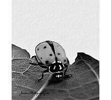 Ladybug Headstand 2       ( Ladybug Series ) Photographic Print